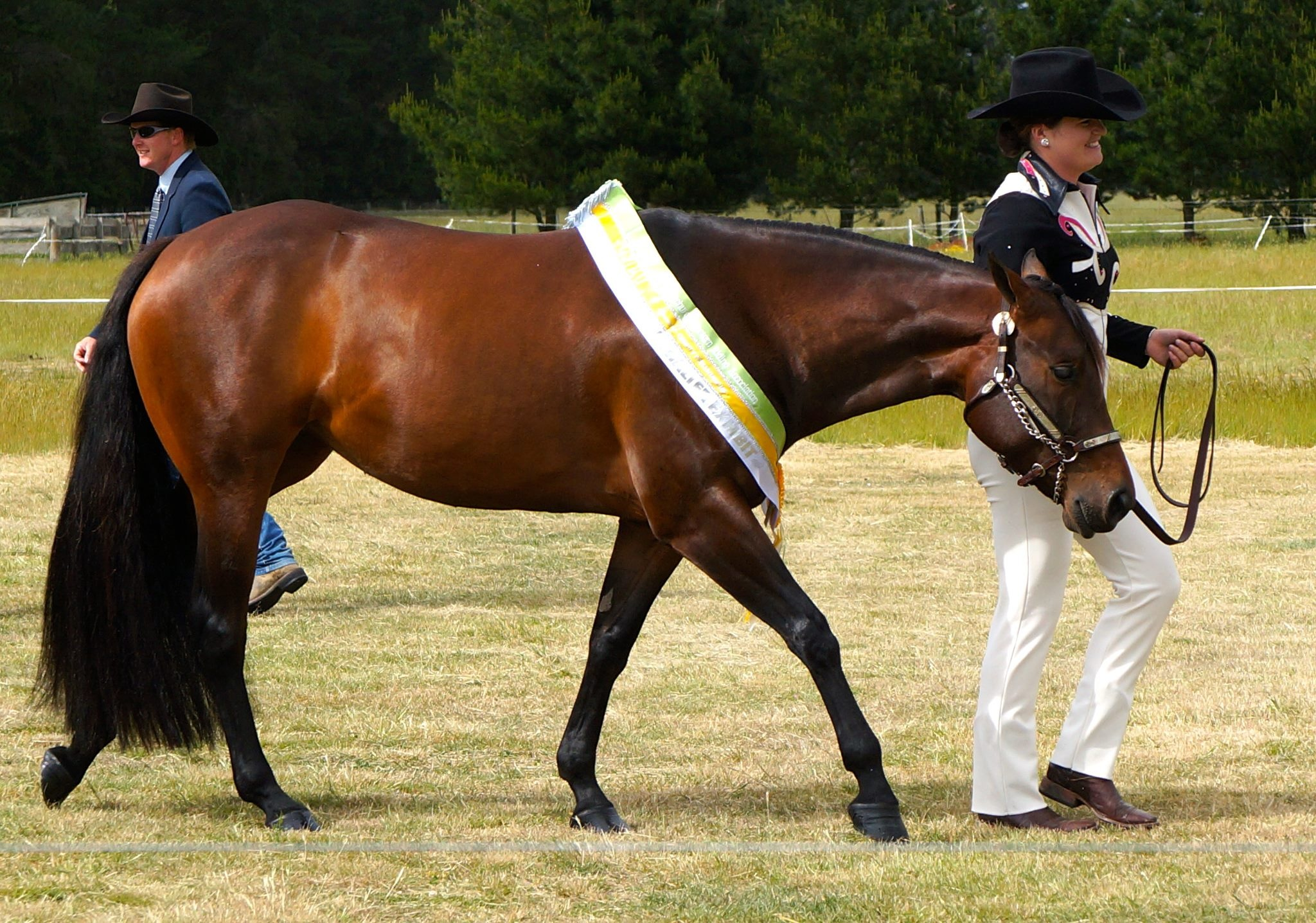 Georgia and GH Passin Class, Supreme Halter Exhibit, 2012 Christchurch Show