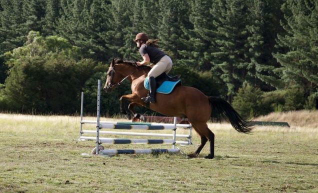 Show-Jumping Day
